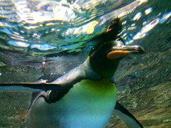 ペンギンワールド!