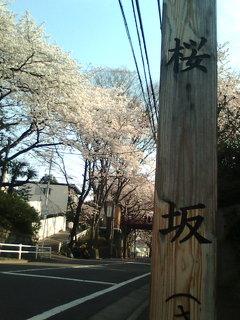 桜坂2009
